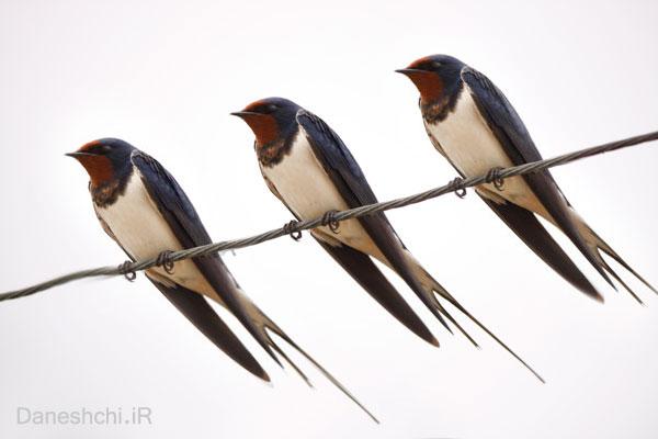 آن پرندگان عزیز