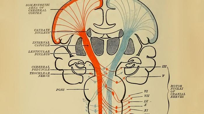 الگوریتمی که از طریق پاداش یاد می گیرد ممکن است نشان دهد مغز ما چگونه عمل می کند