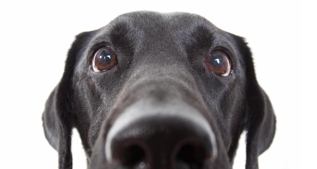 سگ سیاهم...
