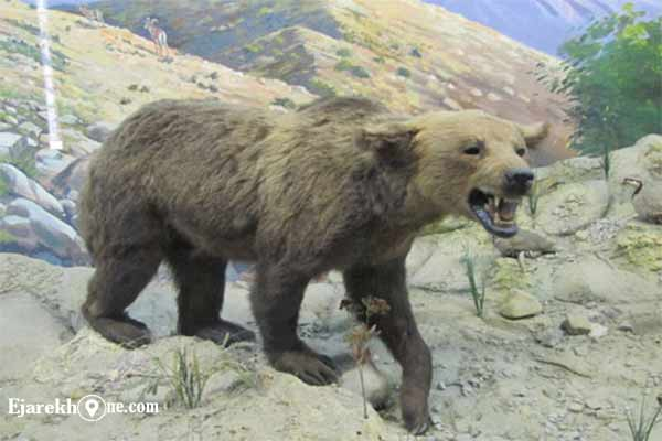 موزه حیات وحش و آثار طبیعی هفت چنار بریانک