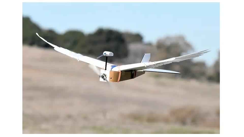 یک روبات مجهز به پرهای کبوتر واقعی، مانند یک پرنده زنده پرواز می کند.
