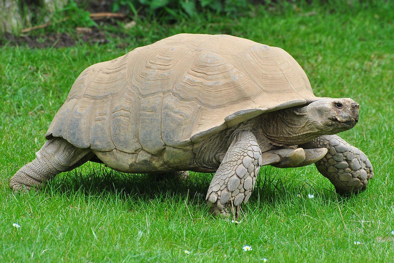 یه زمانی به خرگوش بودنم افتخار میکردم، ولی الان در حسرت لاکپشتها هستم.