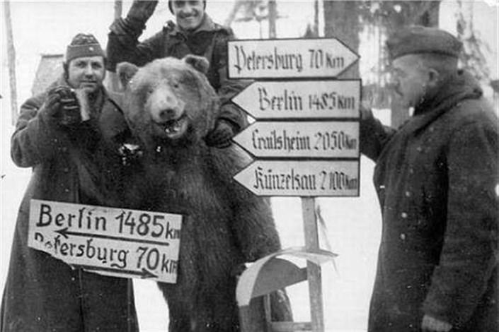 «وُیتِک»، خرسِ ایرانی؛ مشهورترین سربازِ جنگِ جهانیِ دوم!