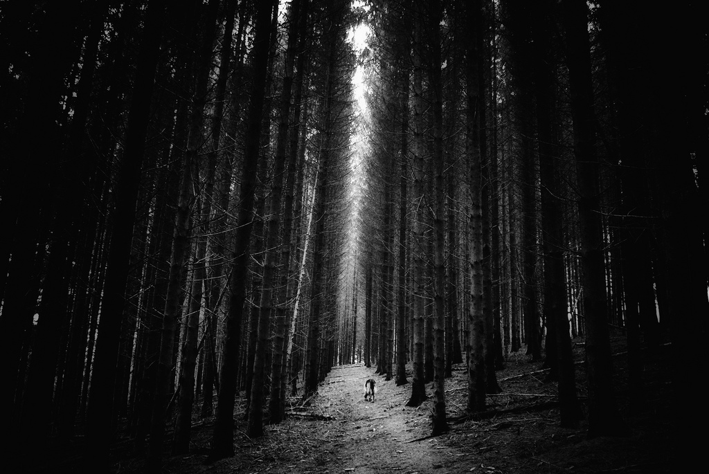 مسیر خانه ی من