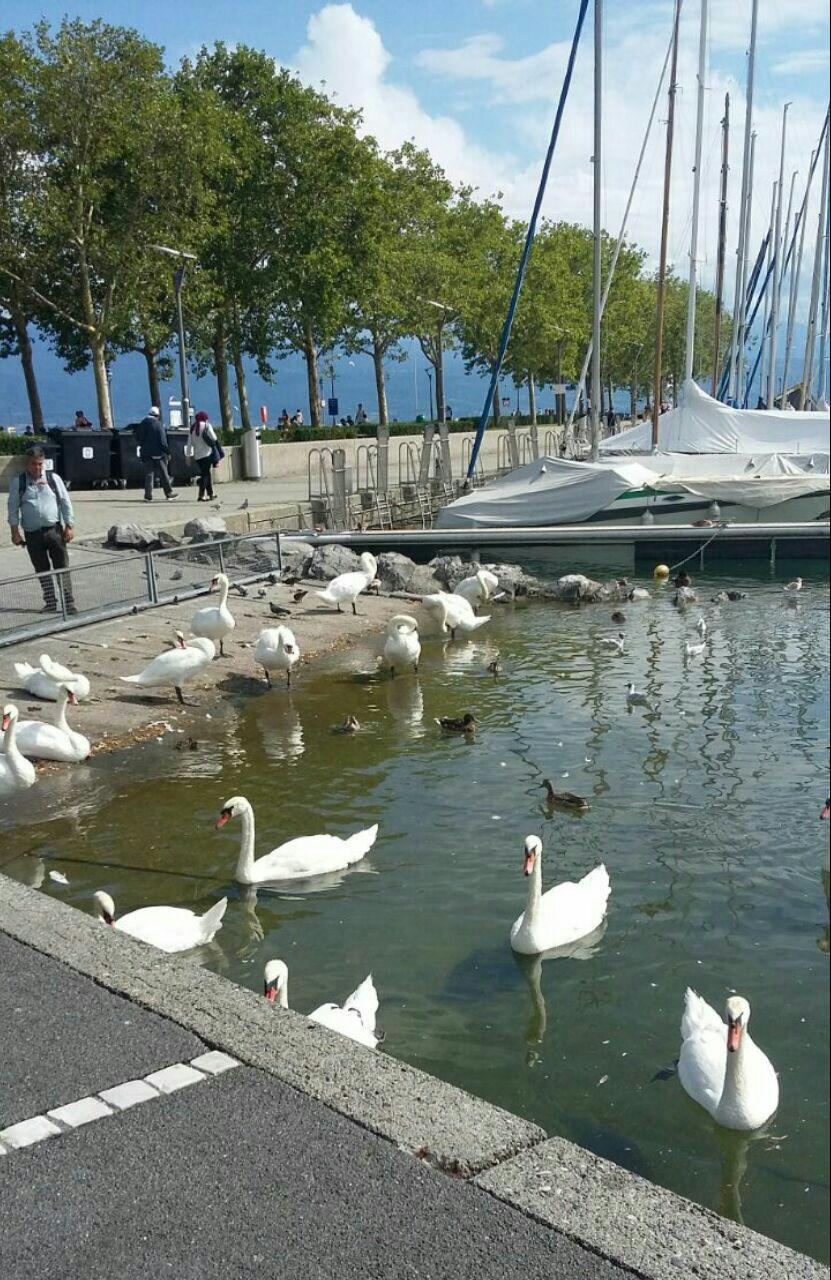 از دریاچه ژنو تا دانشگاه ای پی اف ال سوئیس