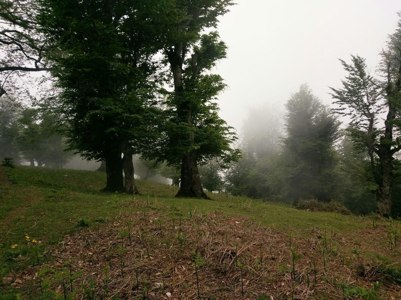 شوق درهم شکستن یک ابر، به هوای تنیدن و بارش