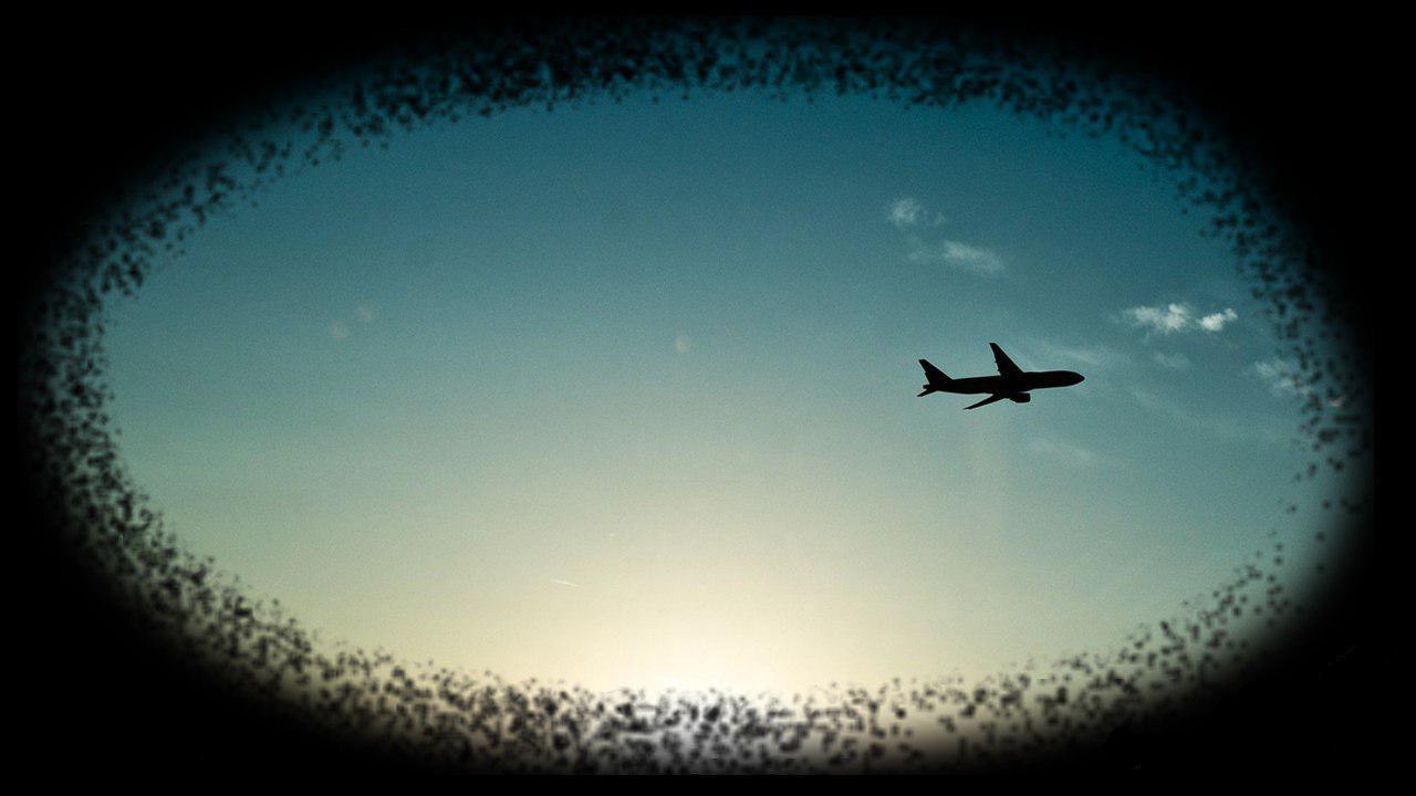 اتوبوس هوایی