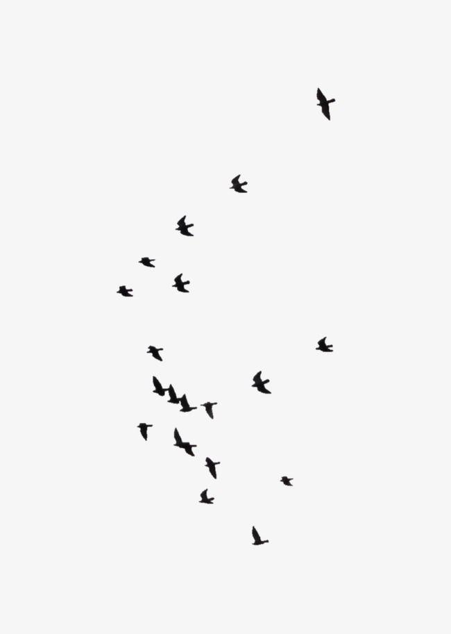 یاد گرفتم که آدمها پرنده نیستند