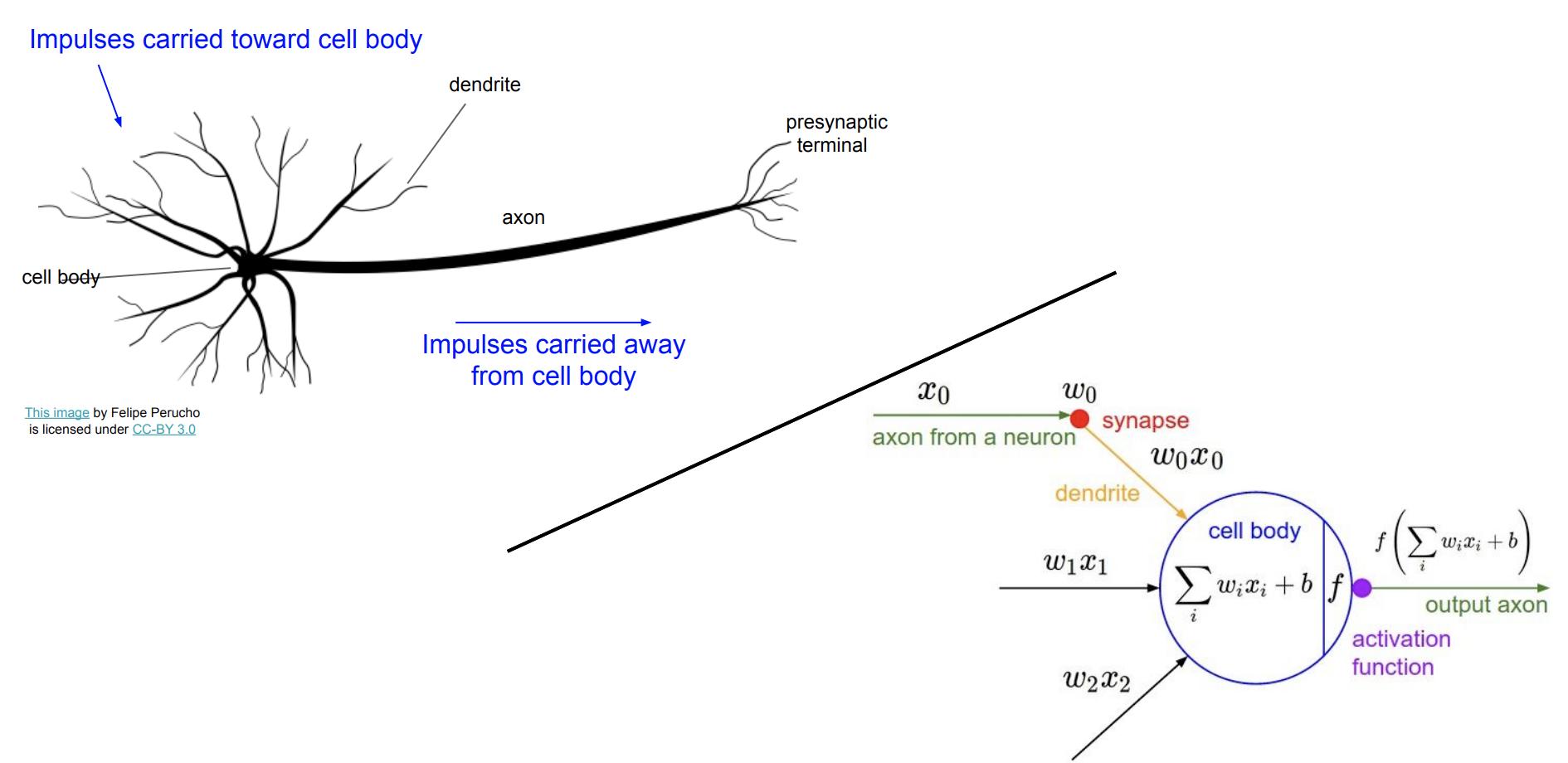 سلول عصبی (Neuron) و مدل مصنوعی آن (Artificial Neuron)