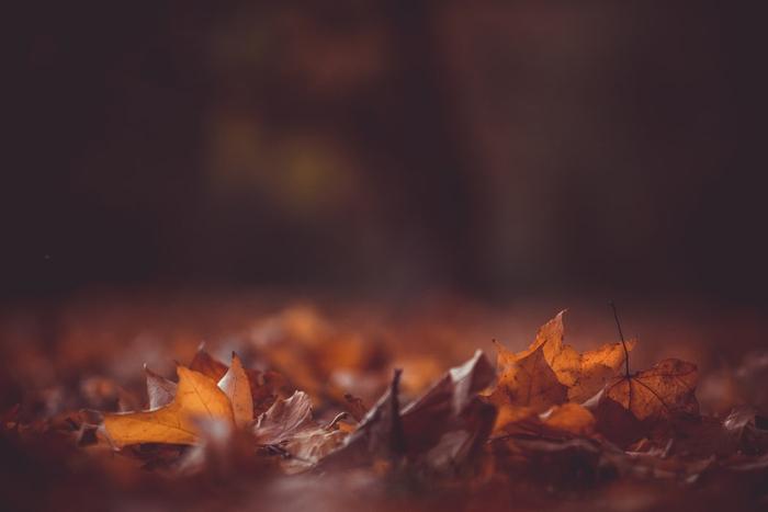 پاییز و خشخش و نوشتن...