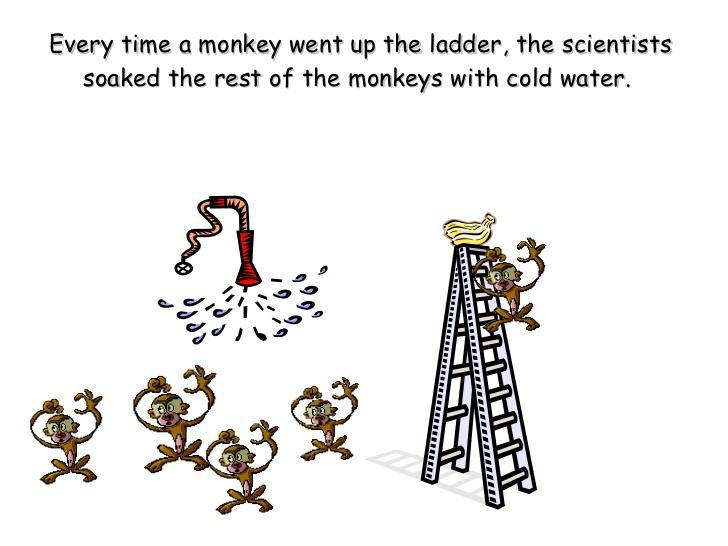 مثال موز و میمون در زمینهی پارادایمهای روزمره