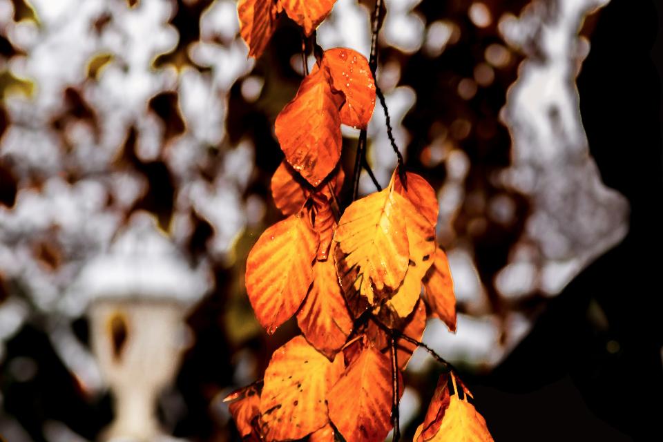 پاییز پایان است یا شروع؟