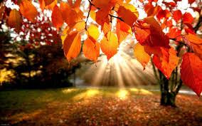 دل گرمی پاییز