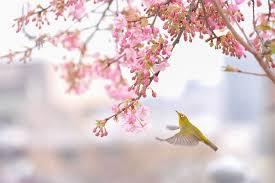 تبریک بهار برای اهالی نازنین ویرگول