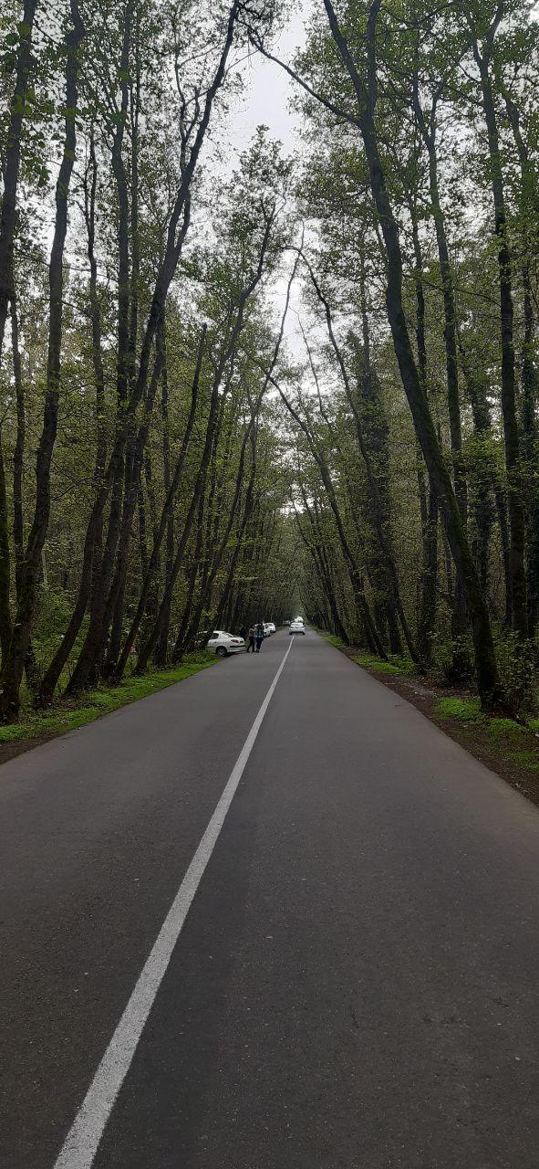 جنگل تونلی