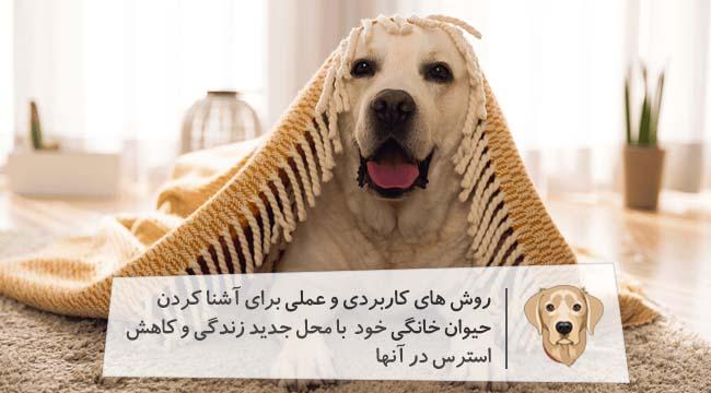 نکاتی خوب در مورد حیوانات خانگی جهت کاهش استرس آنها