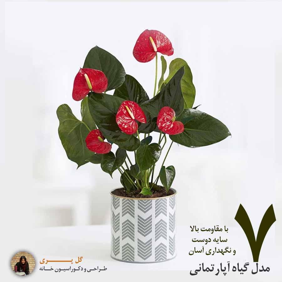 7 مدل از گیاهان سایه دوست و مقاوم ویژه آپارتمانها