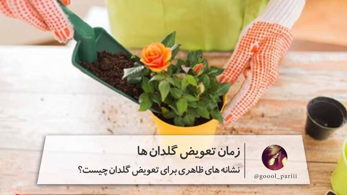 نشانه های ظاهری برای تعویض گلدان