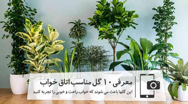 معرفی گیاهان مناسب برای اتاق خواب