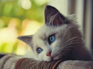 آیا حیوان خانگی شما افسرده است؟