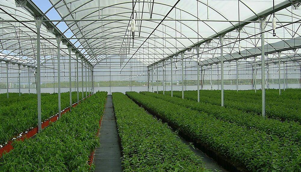 احداث گلخانه ،  از سیر تا پیاز ایجاد گلخانه