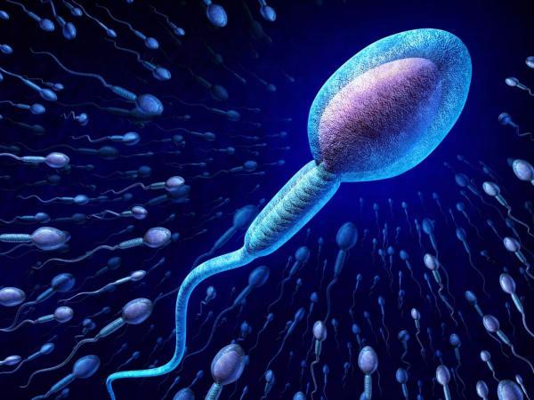 ضعف اسپرم پدر باعث سقط جنین می شود؟