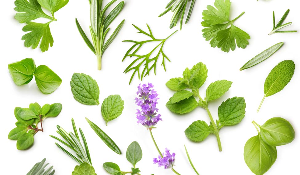 گیاهان دارویی جایگزین مواد شیمیایی مضر