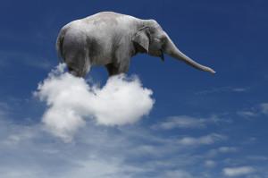 فیل را در هوا ببندید!