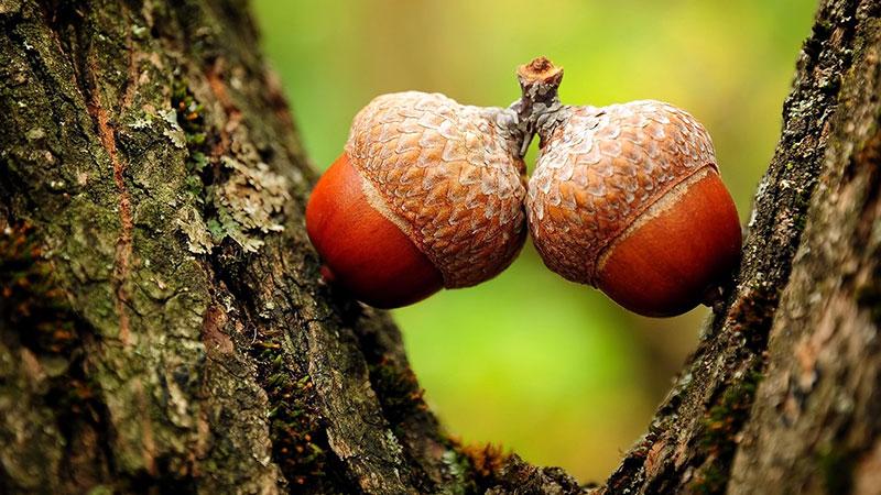 مثل یک درخت بلوط فکر کنید!