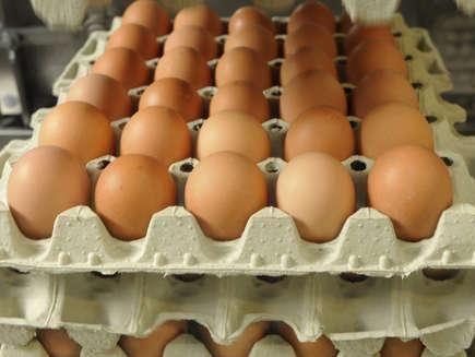 درد سر تخم مرغی2