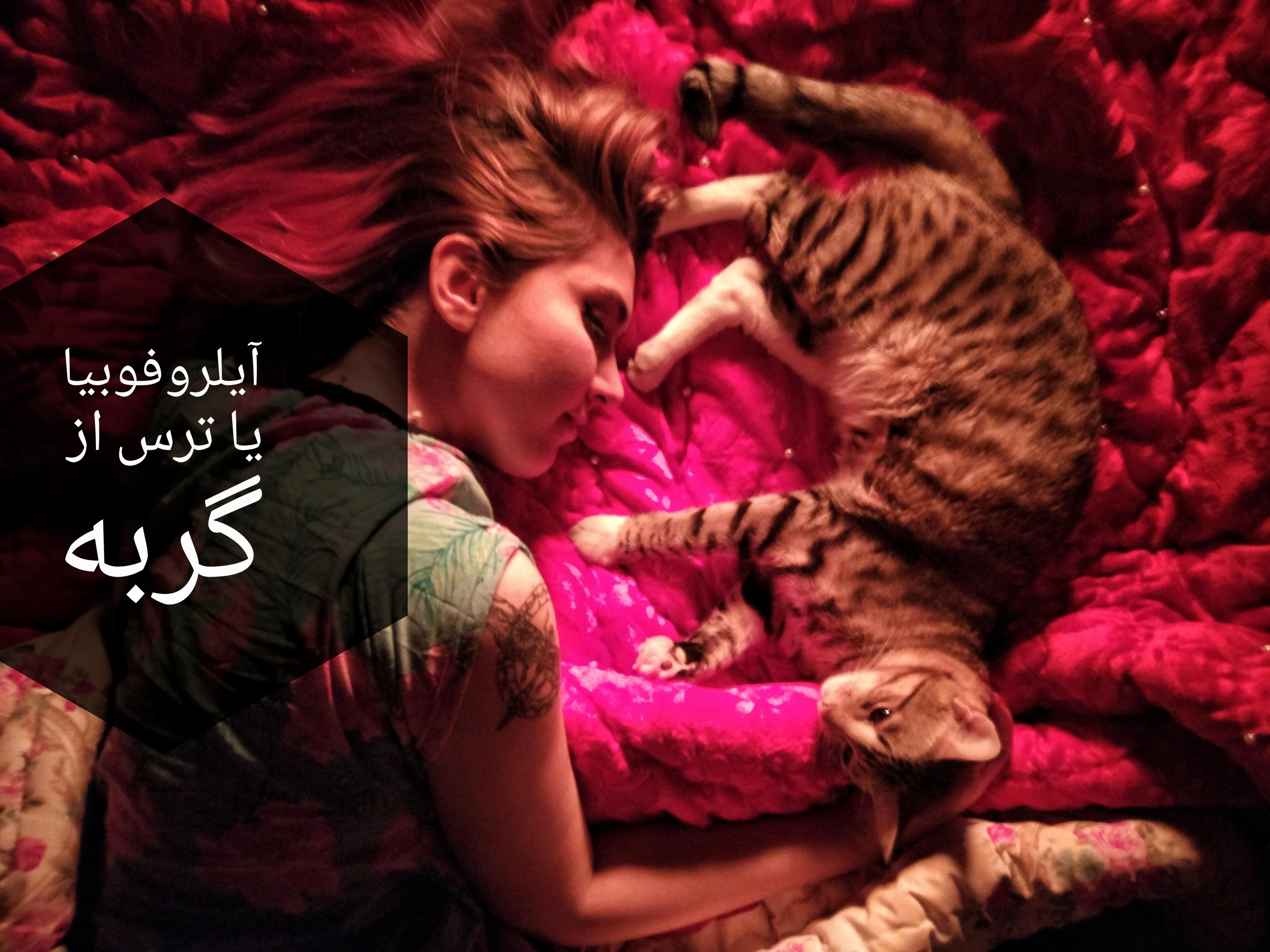 آیلروفوبیا یا ترس از گربه و راههای درمان آن