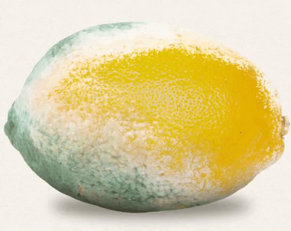 استارتاپ Mori با ساخت لایه محافظتی از پروتئین ابریشم ماندگاری مواد غذایی را افزایش میدهد