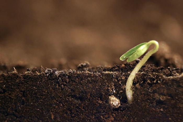 شناسایی وضعيت موجودات زنده خاک، تعداد، تنوع و توزيع جغرافيايي این موجودات و نحوه فعاليت آنها در خاک با Trace Genomics