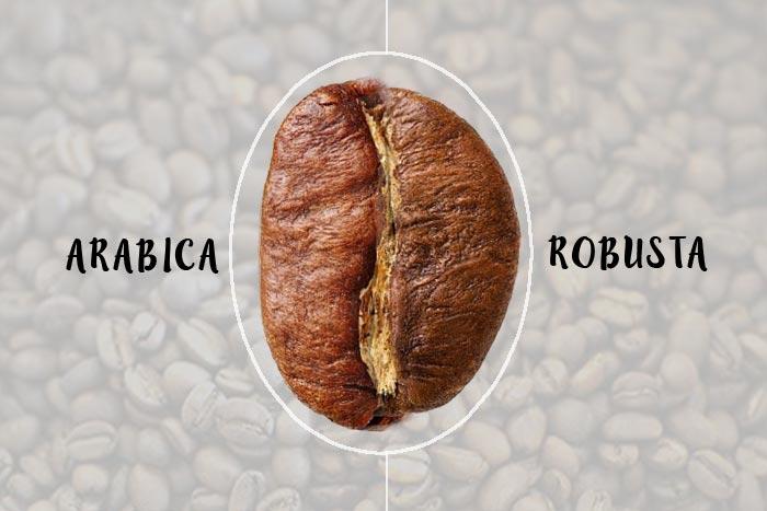 قهوه عربیکا بهتر است یا روبوستا؟ تفاوت عربیکا و روبوستا – قهوه تو