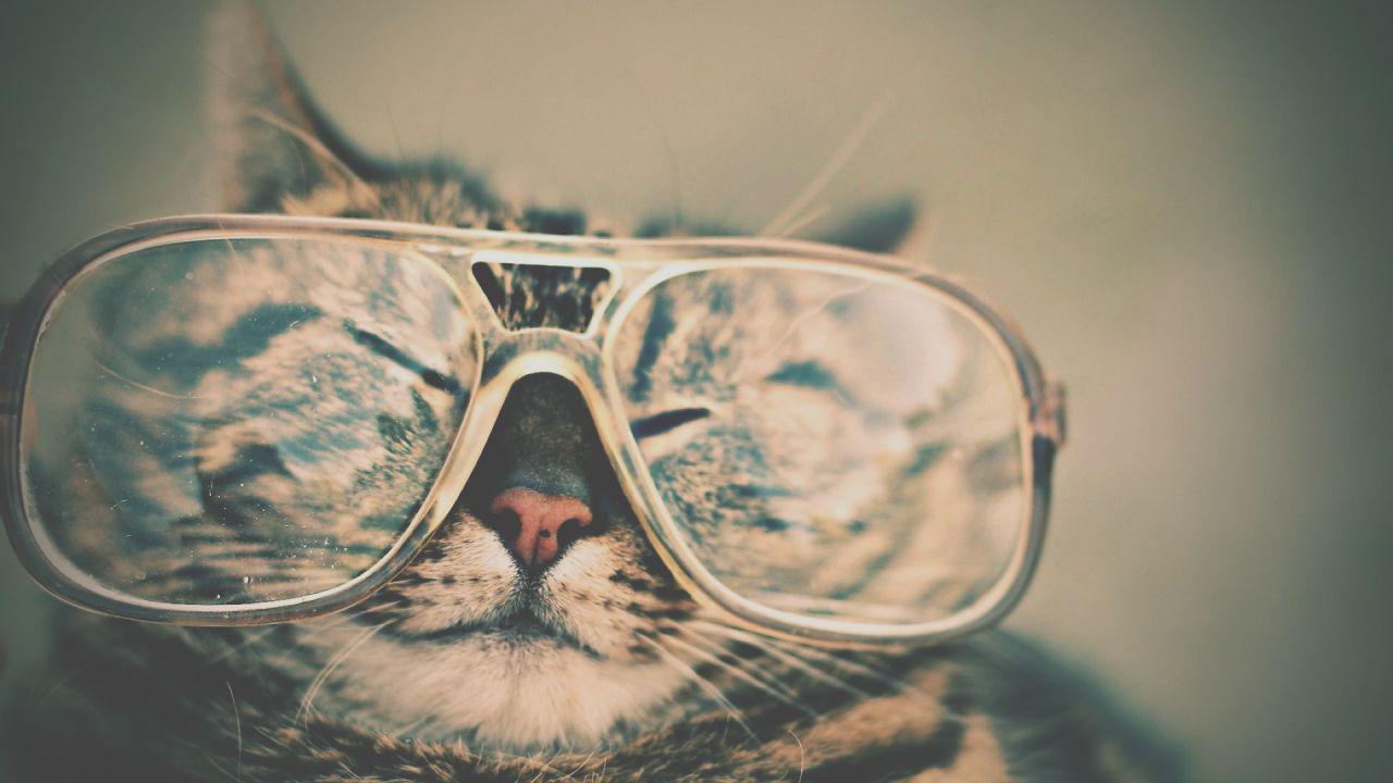 نگاه من به نگاه گربهها
