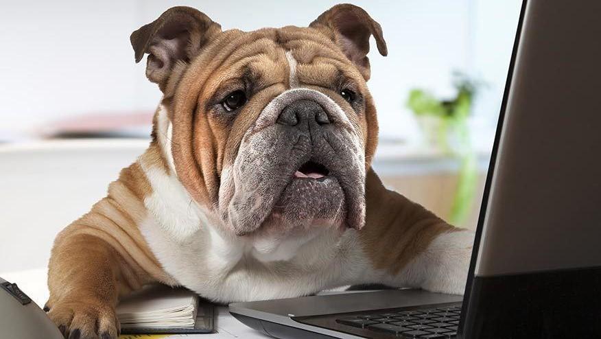 آنچه که سگها راجع به بازاریابی به ما یاد میدهند!