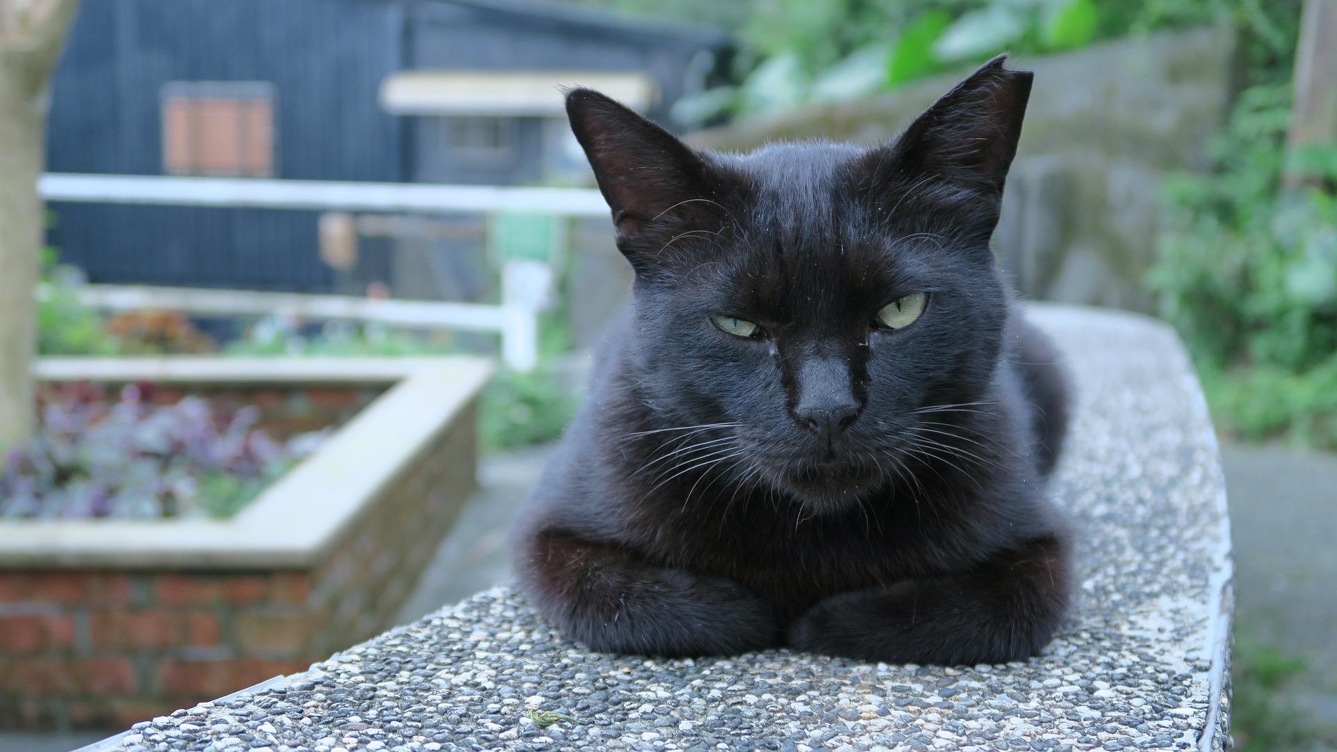 کنترل جمعیت گربههای محلی – قسمت دوم