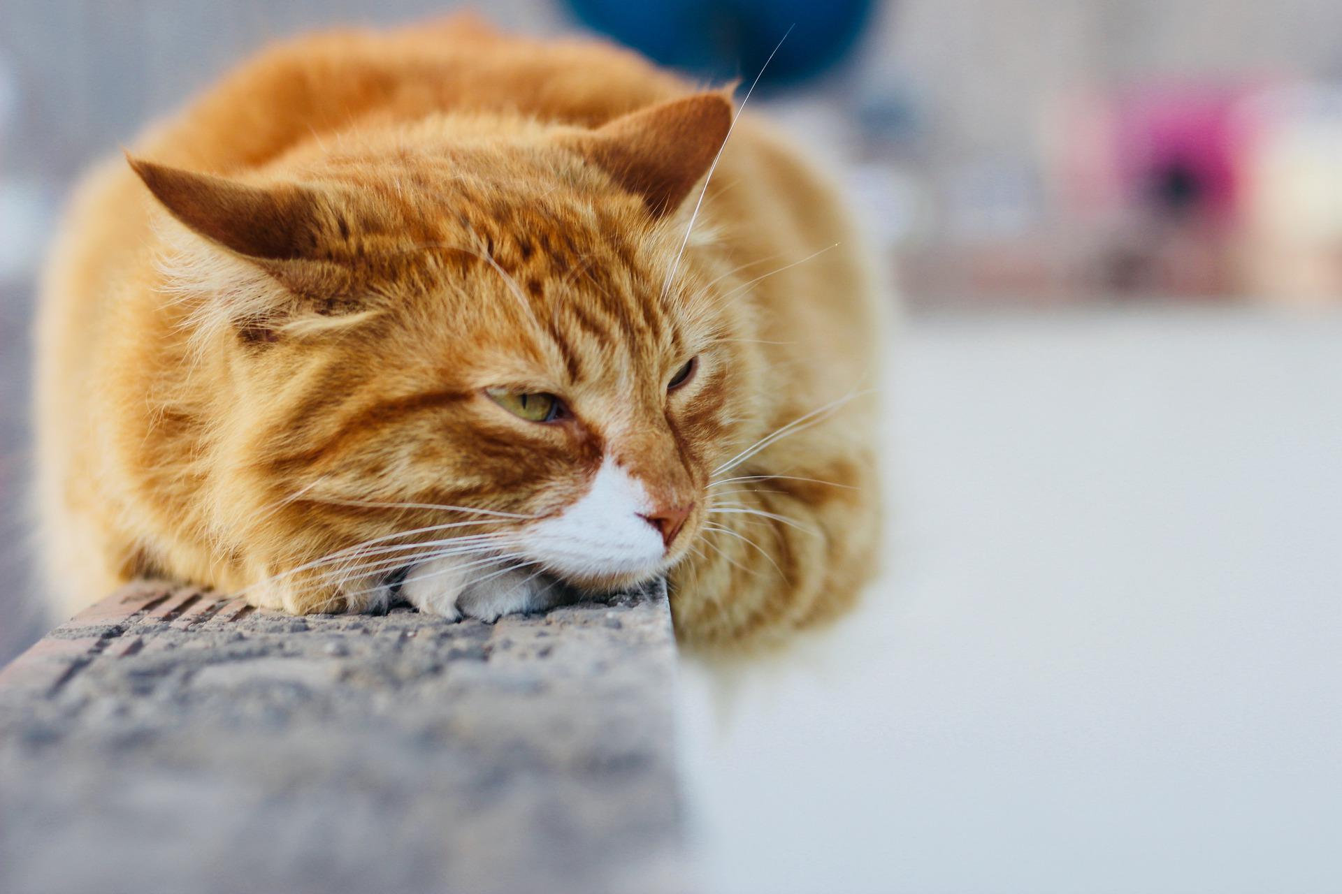 کنترل جمعیت گربههای محلی – قسمت اول