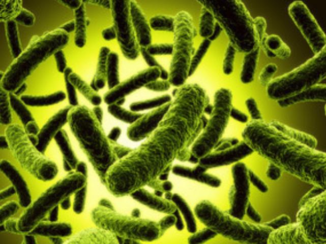پروبیوتیک ها، مواد غذایی معجزه آسا
