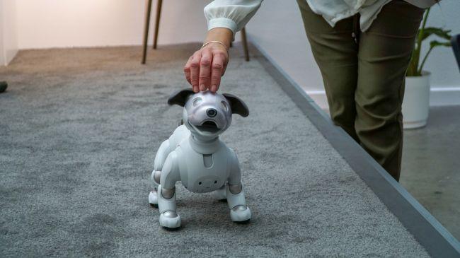 آیبو، اسباب بازی یا حیوان خانگی