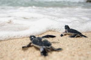 لاک پشت های دریایی وجود دارند