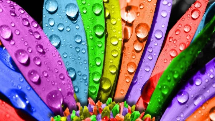 اهمیت رنگ ها در زندگی