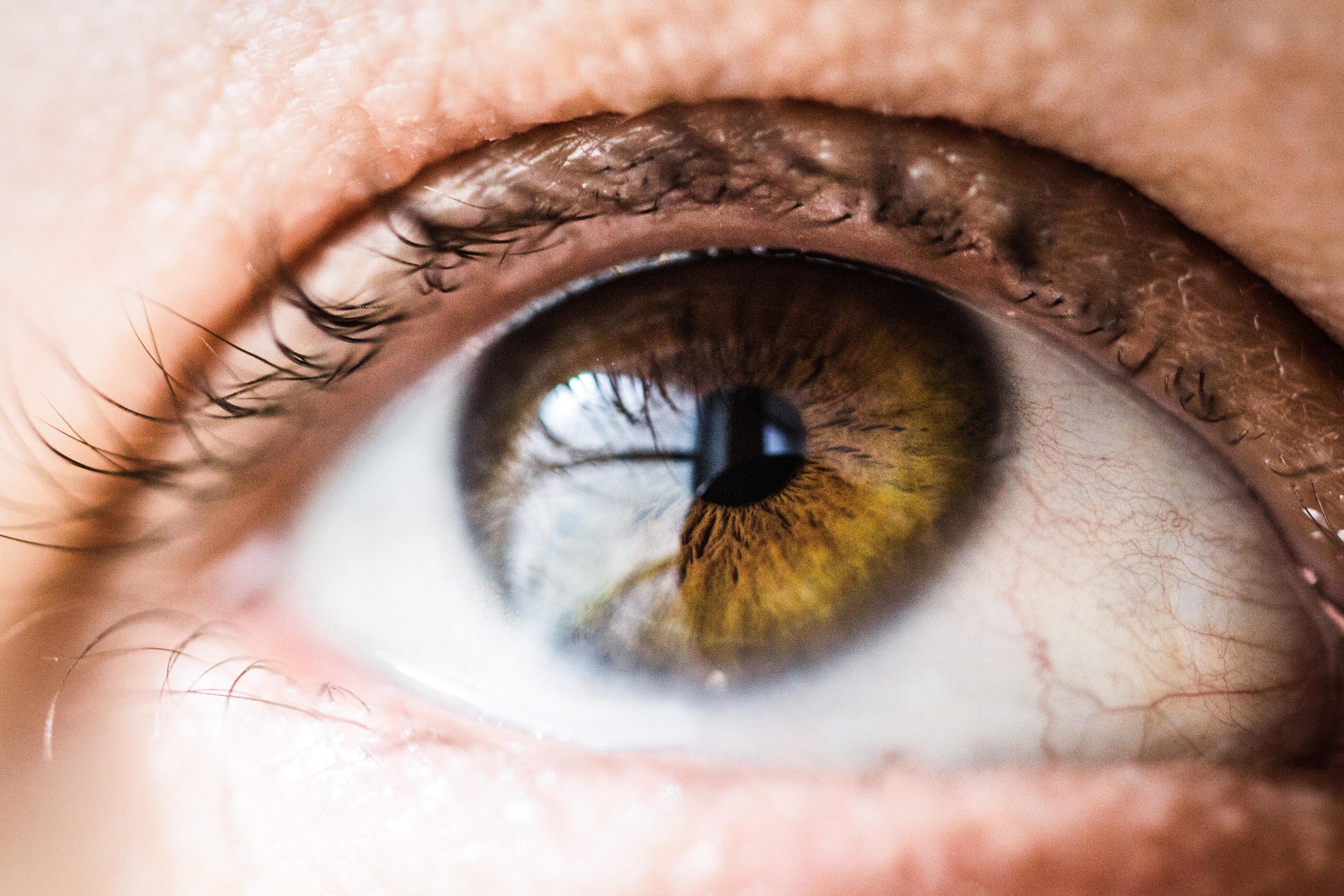 چشمانمان به دنبال چیست؟