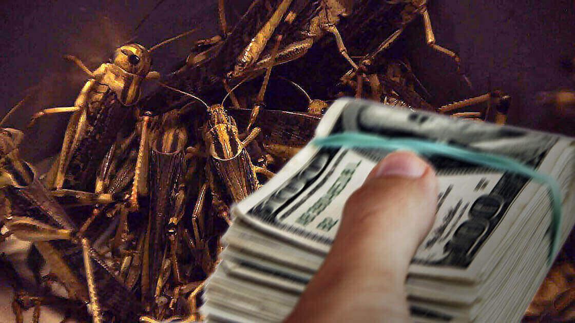 سمپاشی ارزان | سمپاشی تضمینی Inexpensive Pest Control