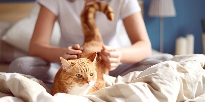 نگهداری حیوانات در آپارتمان قانونا چه حکمی دارد؟