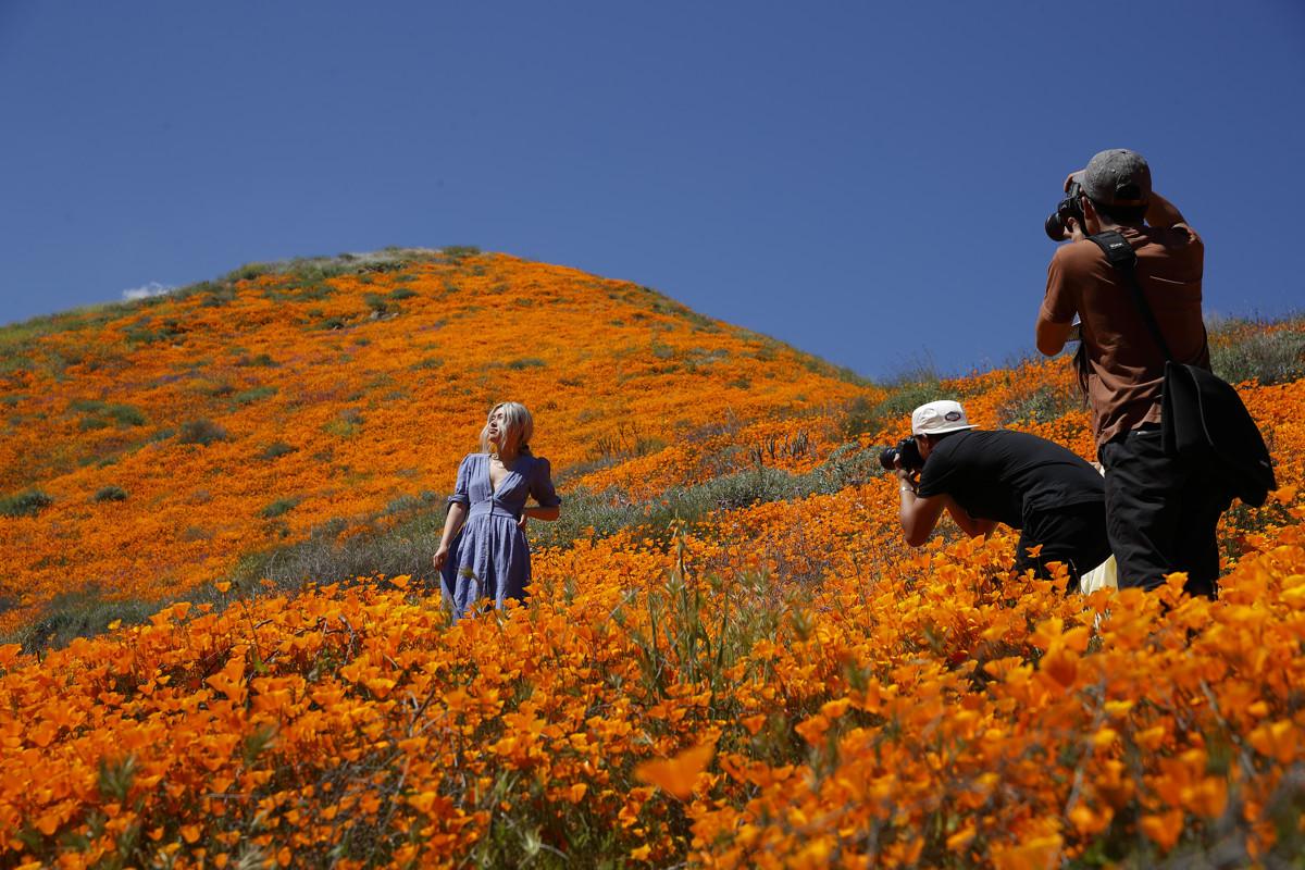 Picture credit: © Deseret News عکاسی در دشت شقایقها به زیستبوم منطقه آسیب میرساند.