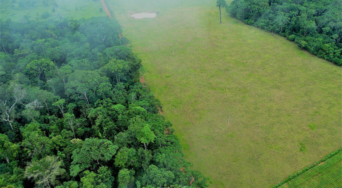 نتايج نشان داده كه پرورش گاو منجر به از بين رفتن 80 درصد جنگل هاي آمازوني شده است
