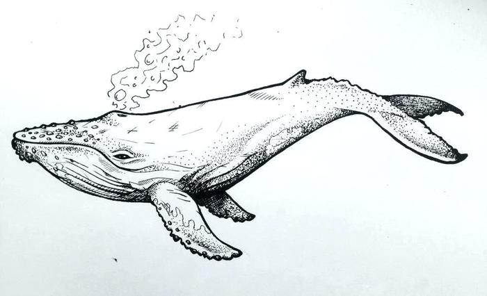 """در سیستم فروش شما """"نهنگ"""" وجود دارد !"""