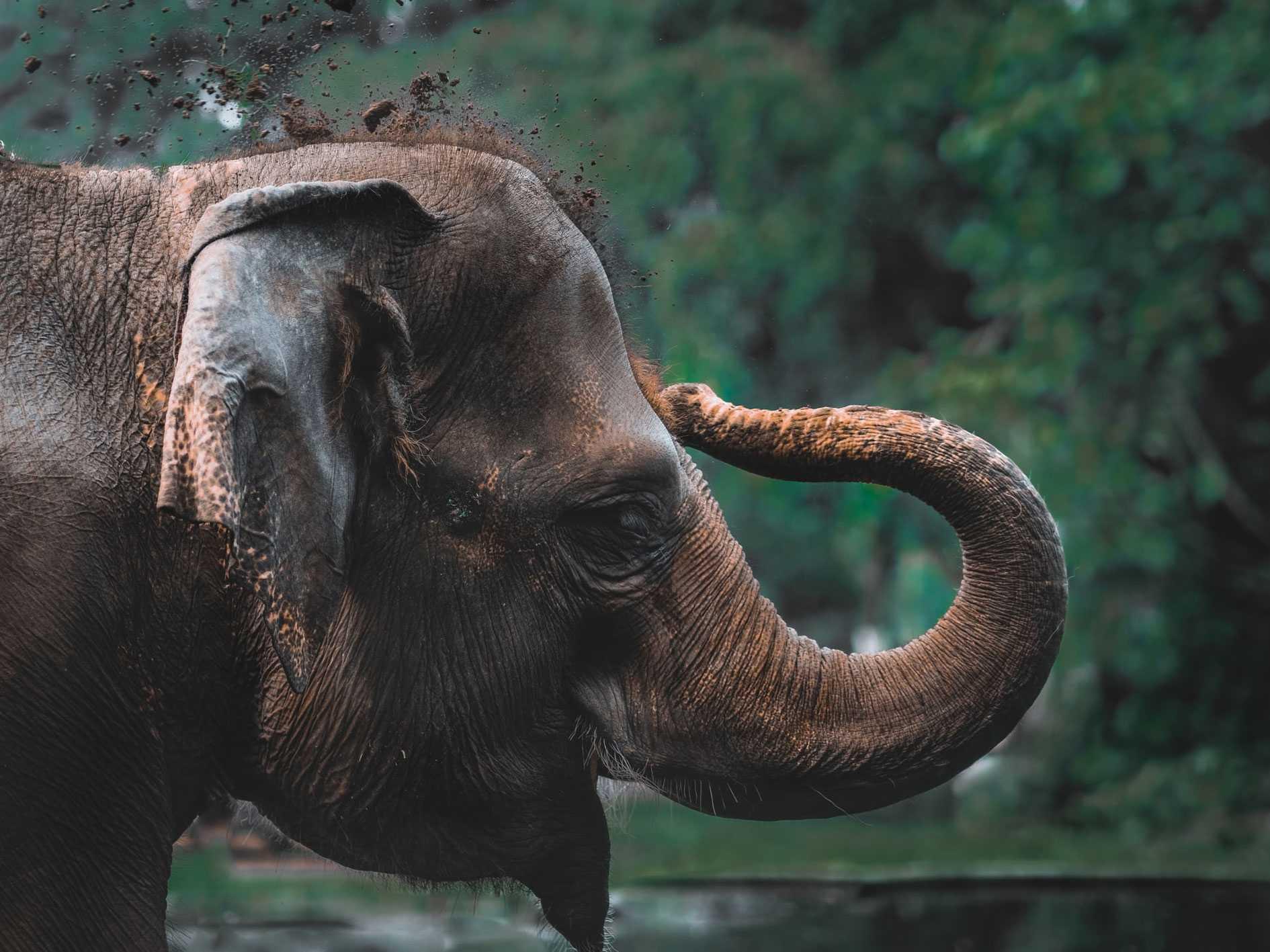 چگونه یک فیل را بخوریم؟