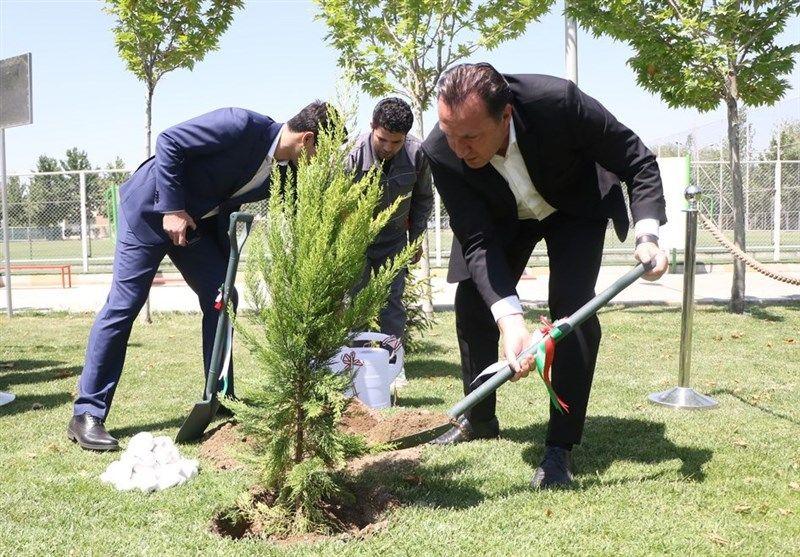 درخت معروف به درخت ۱۶۶ میلیاردی در ورزش ایران!